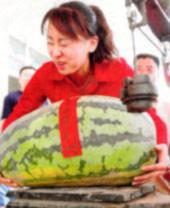 Dưa hấu nặng 30,4 kg