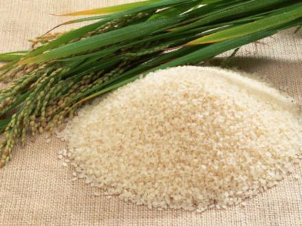 Gạo không cần nấu, ngâm nước là thành cơm