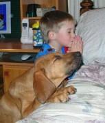 Hài hước chủ và chó
