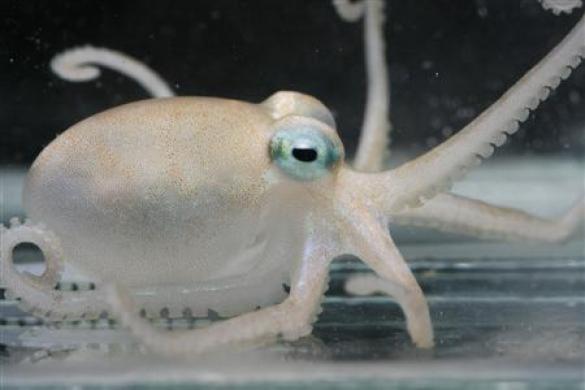 'Nhiệm vụ' mới bạch tuộc: tìm thuốc quý
