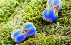 Những bức ảnh 'cực độc' về phấn hoa