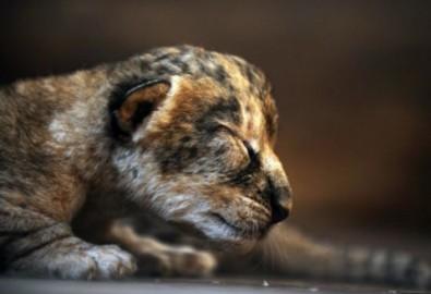 Động vật đáng yêu khi ngủ