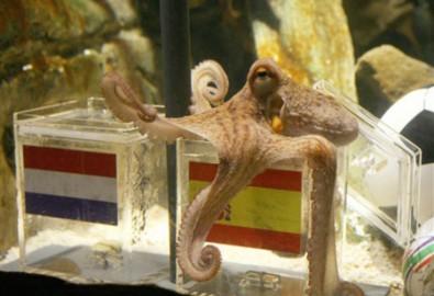 Tây Ban Nha sốt sắng mời bạch tuộc Paul