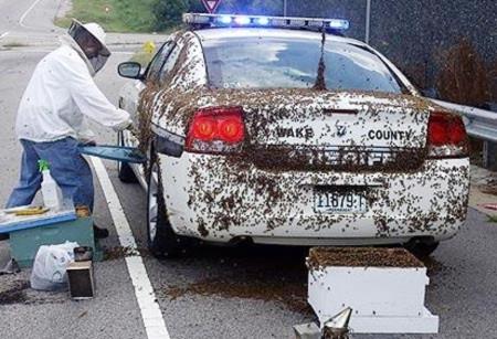 Cảnh sát chịu thua một đàn ong