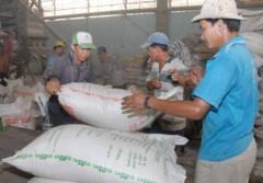Không đồng ý xuất khẩu thêm 500.000 tấn gạo