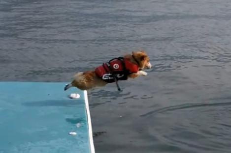 Lần đầu tập bơi
