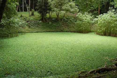 Phát hiện hồ chứa nước cổ của người Maya