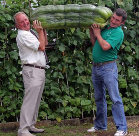 Quả bí xanh khổng lồ nặng hơn 50kg