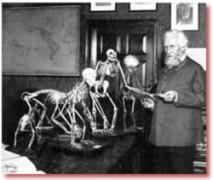 Sự thật về Thuyết tiến hóa: Những hình vẽ phôi thai giả của Haeckel, lời nói dối xuyên thế kỷ (phần 1)