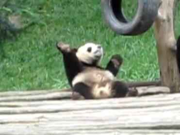 Thư giãn kiểu gấu trúc