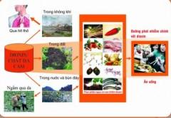 Thực phẩm là con đường chính phơi nhiễm dioxin