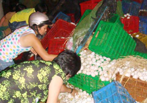 Tranh nhau nhặt trứng khi ôtô tải gặp nạn