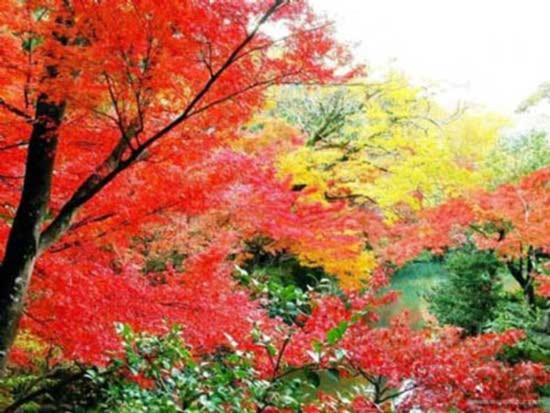 9 địa điểm ngắm mùa thu đẹp ở Trung Quốc