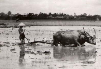 Người Việt có thông minh không?