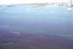 Thủy triều đỏ' đe dọa New York