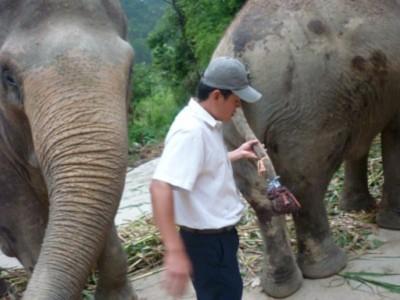 Đuôi voi vừa bị cắt có giá ít nhất 150 triệu đồng