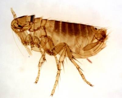 Xuất hiện bọ cắn chết người ở Trung Quốc