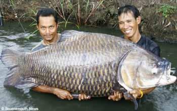 10 sinh vật kì quái nhất từng sa lưới