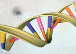 Giới khoa học vẫn miệt mài xác định số lượng bộ gen người - Ảnh: genome.gov
