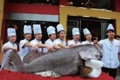 Chú cá nặng 301 kg, dài 2,1 mét
