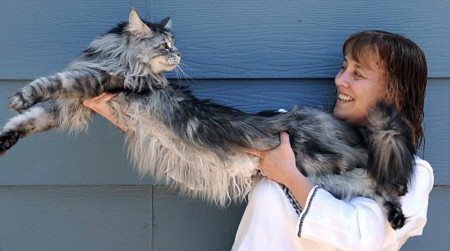 Robin Henderson và con mèo siêu dài.