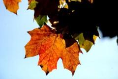 Đẹp mê hồn mùa thu nước Anh