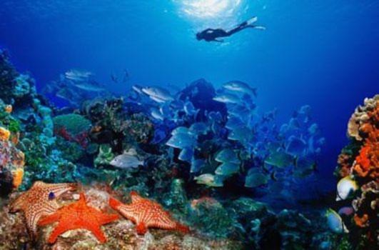 Hình ảnh tuyệt đẹp về những dải san hô
