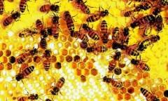 Não loài ong đánh bại máy tính