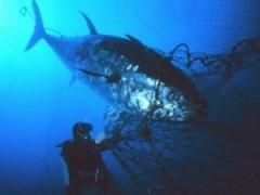 Số lượng cá sẽ giảm mạnh trong vòng 40 năm tới