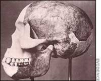 Thuyết tiến hóa: Vụ lừa đảo 'Piltdown Man' chấn động thế giới (Phần 2) - Tin180.com (Ảnh 1)