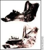 Thuyết tiến hóa: Vụ lừa đảo 'Piltdown Man' chấn động thế giới (Phần 2) - Tin180.com (Ảnh 3)