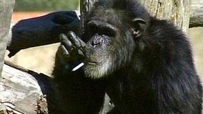 Tinh tinh nghiện thuốc lá qua đời