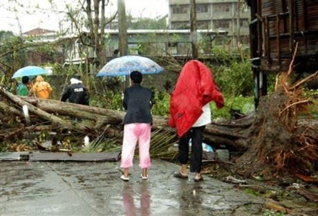 Cây cối đổ nát sau bão tại Philippines. Ảnh: AFP.