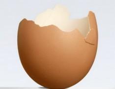 Vỏ trứng giúp chống biến đổi khí hậu!