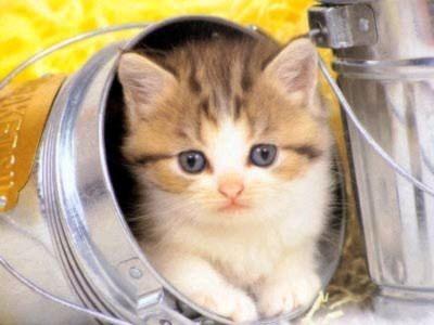Những chú mèo tinh nghịch (1)