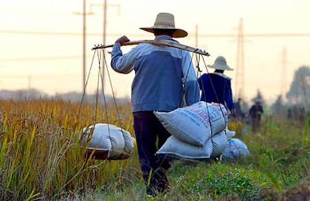 Sản lượng lương thực Trung Quốc giảm vì biến đổi khí hậu