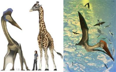 """Tại sao """"khủng long hươu cao cổ"""" bay được?"""