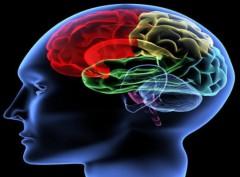 Thiết bị kết nối não với máy móc