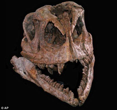 Tìm ra tổ tiên khủng long ăn cỏ khổng lồ