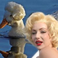 Vịt đỏm dáng với kiểu đầu Marilyn Monroe