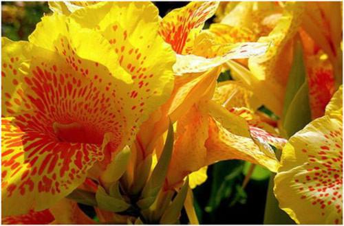 10 loài hoa đẹp nhất thế giới