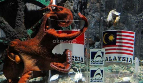 Bạch tuộc dự đoán Indonesia thắng Malaysia