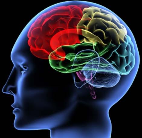 Bạn đã hiểu rõ trí não của mình chưa?