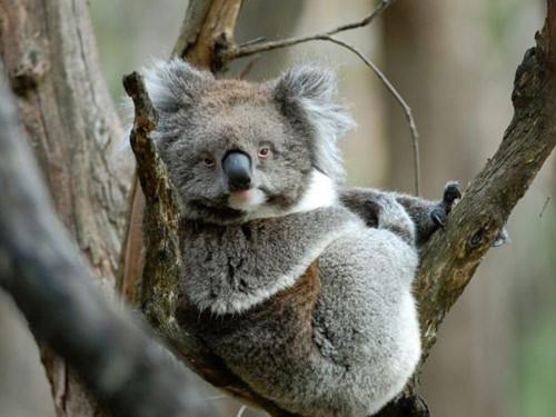 Cảnh đẹp mê hồn ở Australia - Tin180.com (Ảnh 6)