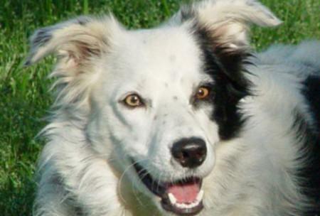 Con chó nhớ hơn 1.000 từ