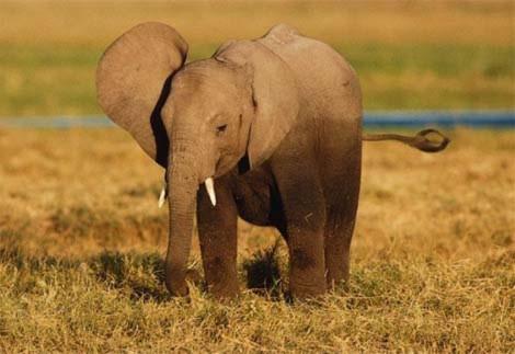 Hãy hiểu chính xác bí ẩn về thế giới động vật
