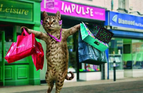 Lịch mèo lạ mắt cho năm Tân Mão