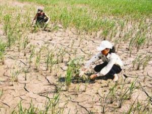Miền Bắc đối mặt nguy cơ khô hạn nghiêm trọng