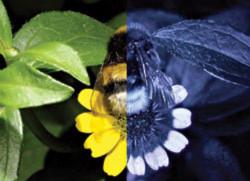 Nhìn thực vật qua mắt của loài ong