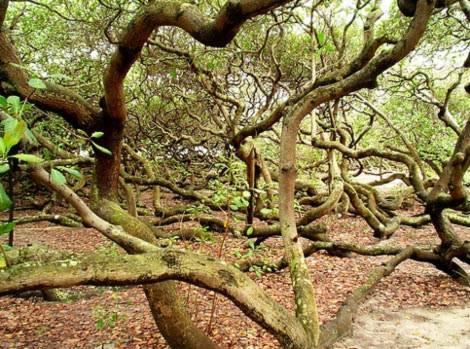 Những loài cây kỳ lạ trên Trái đất